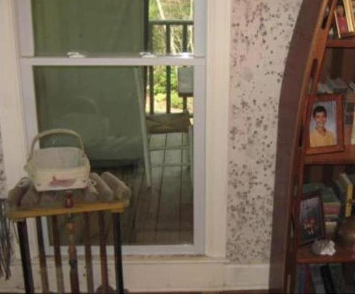 Mold In The Home Before