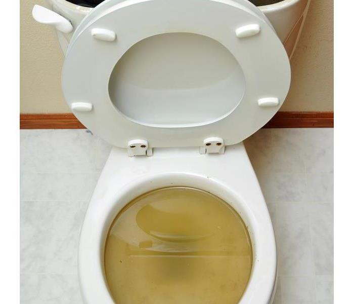Sewage backup of a toilet