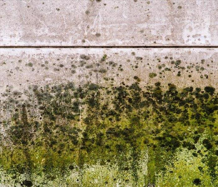Mold Remediation When Mold Keeps Growing Back, Here's What You Need To Know